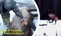 Video: Heartwarming Rescue of Red Deer From Frozen Siberian River
