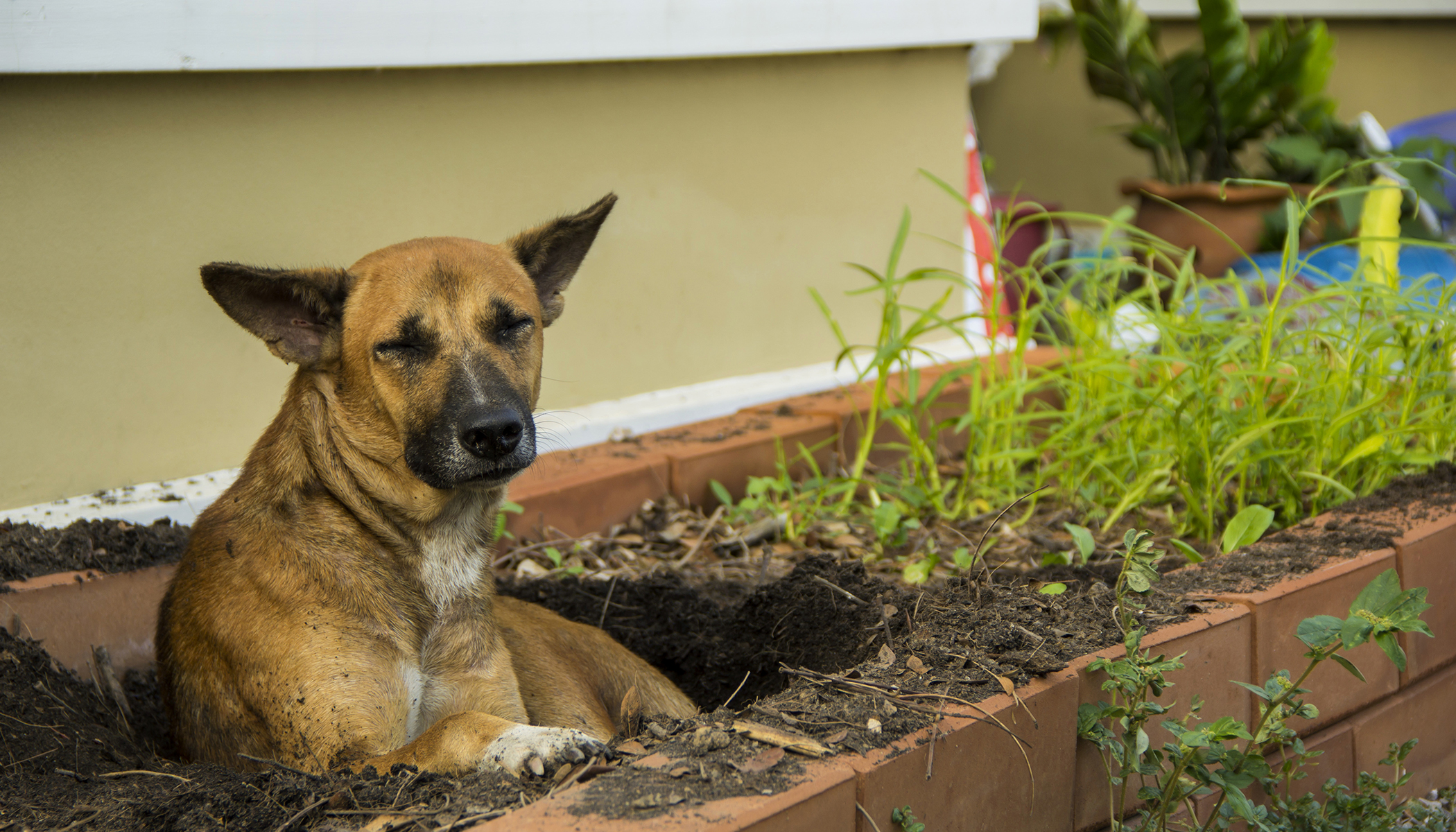 Homeless Dog Dug a Hole in a Grave, Appears to Be Protecting a 'Secret'—Take a Closer Look