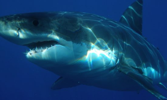 Fisherwoman Reels in 15-foot Shark in 90 Minutes