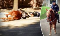 Heartbreaking Viral Photo: Officer Comforts Injured Police Horse in Last Moments of Life