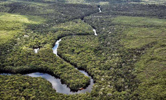 Amazon Tribe Saves Millions of Acres of Rainforest After Beating Big Oil in Court Battle