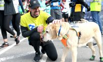 Blind Runner Completes Half-Marathon With Help From Running Guide-Dog Team
