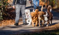 Man Who Owns 27 Dogs Is Diagnosed With Terminal Cancer, Begs People to Adopt His Furry Family