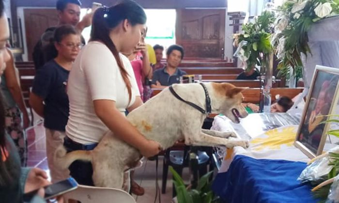Sad Dog Waits for Rescuer's Return Every Day, Then Woman Shows Him the Man's Casket