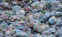 Wax Worms: Scientist Accidentally Discovers Possible Solution to Plastic Waste Crisis