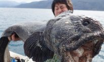 Huge 'Mutant Monster' With Gaping Mouth Caught Near Fukushima Nuclear Disaster Site