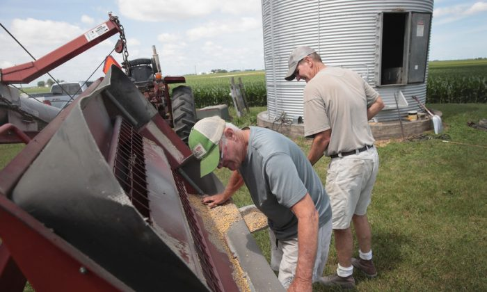 Farmer John Duffy (L) and Roger Murphy load soybeans from a grain bin onto a truck in Dwight, Ill., on June 13, 2018.   (Scott Olson/Getty Images)