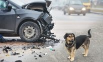The Reason Why the Photo of Dog Refusing to Leave Tragic Car Crash Scene Went Viral