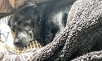 Sad Elderly Dog Refuses to Leave Dead Owner's Body for Full One Day Until Cops Arrive