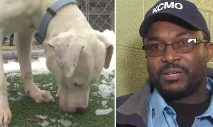 Dog Tossed Out of Car by Owner at Illegal Dumping Site Gets a Life-Changing Surprise