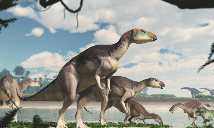 An undated artist's impression of the Fostoria dhimbangunmal dinosaur whose remnants have been discovered in Lightning Ridge, Australia. (James Kuether/University of New England).