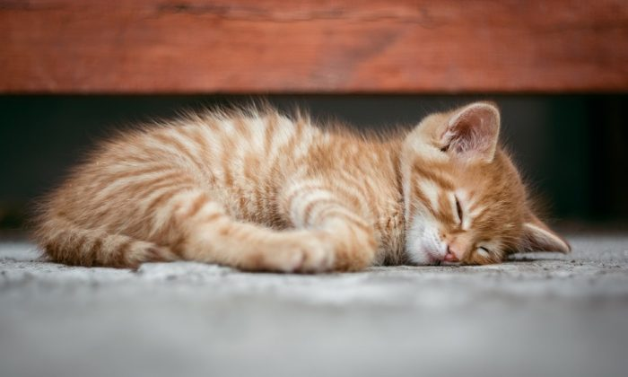 Stock image of a kitten. (Super-mapio/Pixabay)