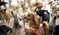 Man Can't Stand to See Homeless Dogs Dying on the Streets–So He Adopts 450 of Them