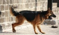 2 Men Strangulate German Shepherd With a Belt for Biting Child's Ear