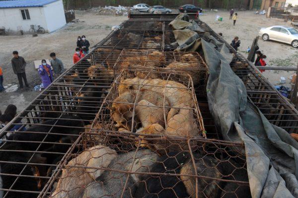 China dog rescue