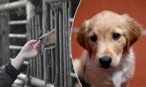 Americans Help Rescue Dogs Destined for Chinese Dinner Table