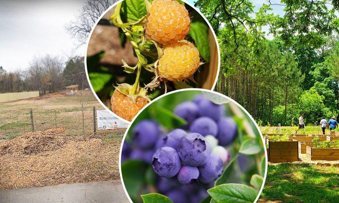 (L) (Google); (Inset Bottom) (Illustration | Shutterstock); (Inset Top,R) (Urban Food Forest at Browns Mill | Facebook)