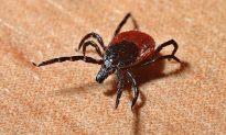 Veteran Dies After Contracting Rare Tick-Borne Virus in New Jersey