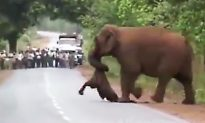 Video Shows Elephants Taking Part in Dead Calf's Heartbreaking 'Funeral Procession'