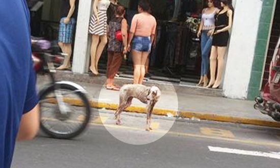 Starved Dying Dog Is Ignored by All, but a Lady Shows Up and His Fate's Changed