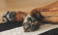 Vet Shares Photo of Burned Paws With a Warning to Dog Owners on Hot Pavements