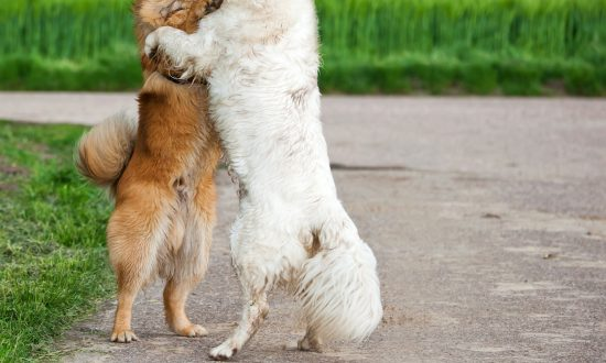 Viral Photo of 2 Dogs Hugging at Kill Shelter Reveals a Heartbreaking Truth