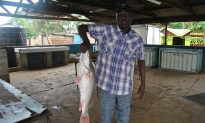 Chinese Demand for Nile Perch Maw Threatens to Wipe Out Species in East Africa