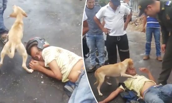 Dog 'Protects' Drunk Owner From Anyone Getting Too Close After He Passes Out on Street