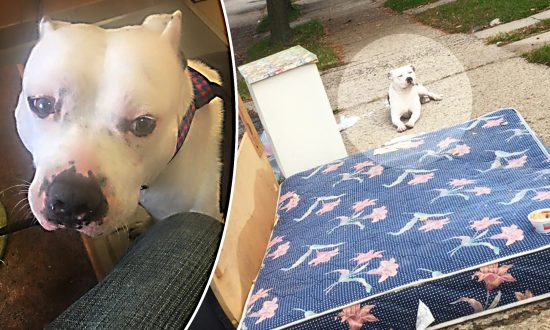 Dog Quietly Waits on Discarded Mattress After Owners Leave Him Behind With Trash