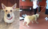 Scared Dog Is Dragged Into High-Kill Shelter by Family. A Day Later, Her Life Changes