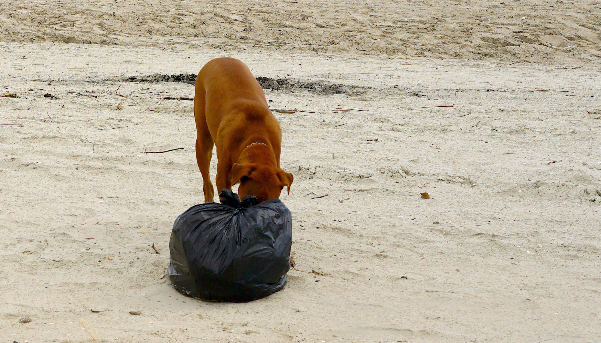 Dog Brings Trash Bag Home. When Owners See What's Inside, They Rush to Hospital