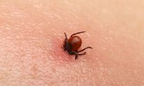 Parents Warn About Dangers of Ticks After Deadly Illness Kills Their Child
