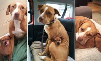 Pair of Dogs Bonded at a Shelter & Won't Leave Each Other's Side–Then Their Photo Went Viral