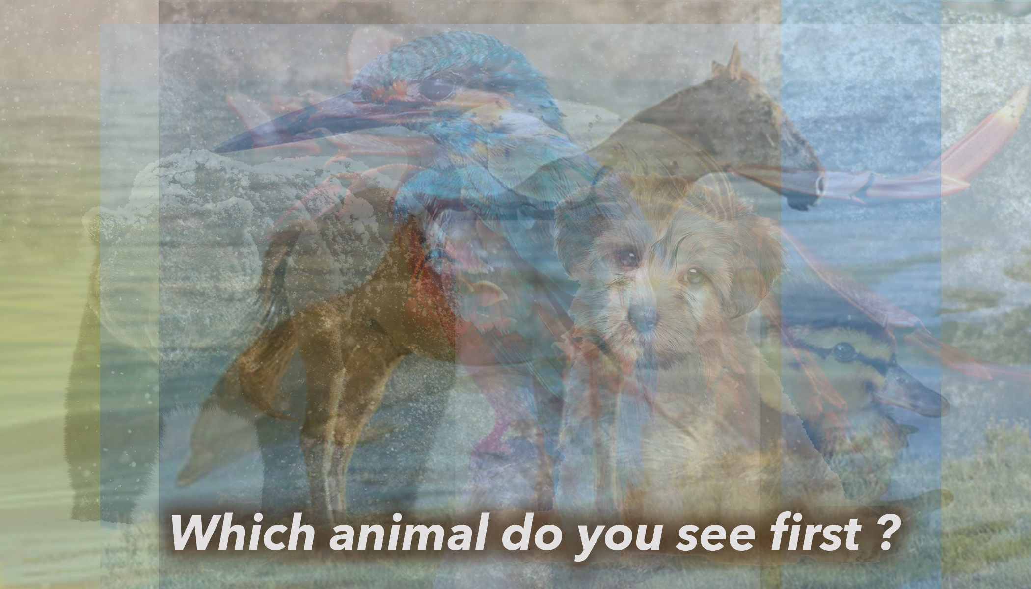 The First Animal You See in This Photo Can Reveal Who You Truly Are As a Person