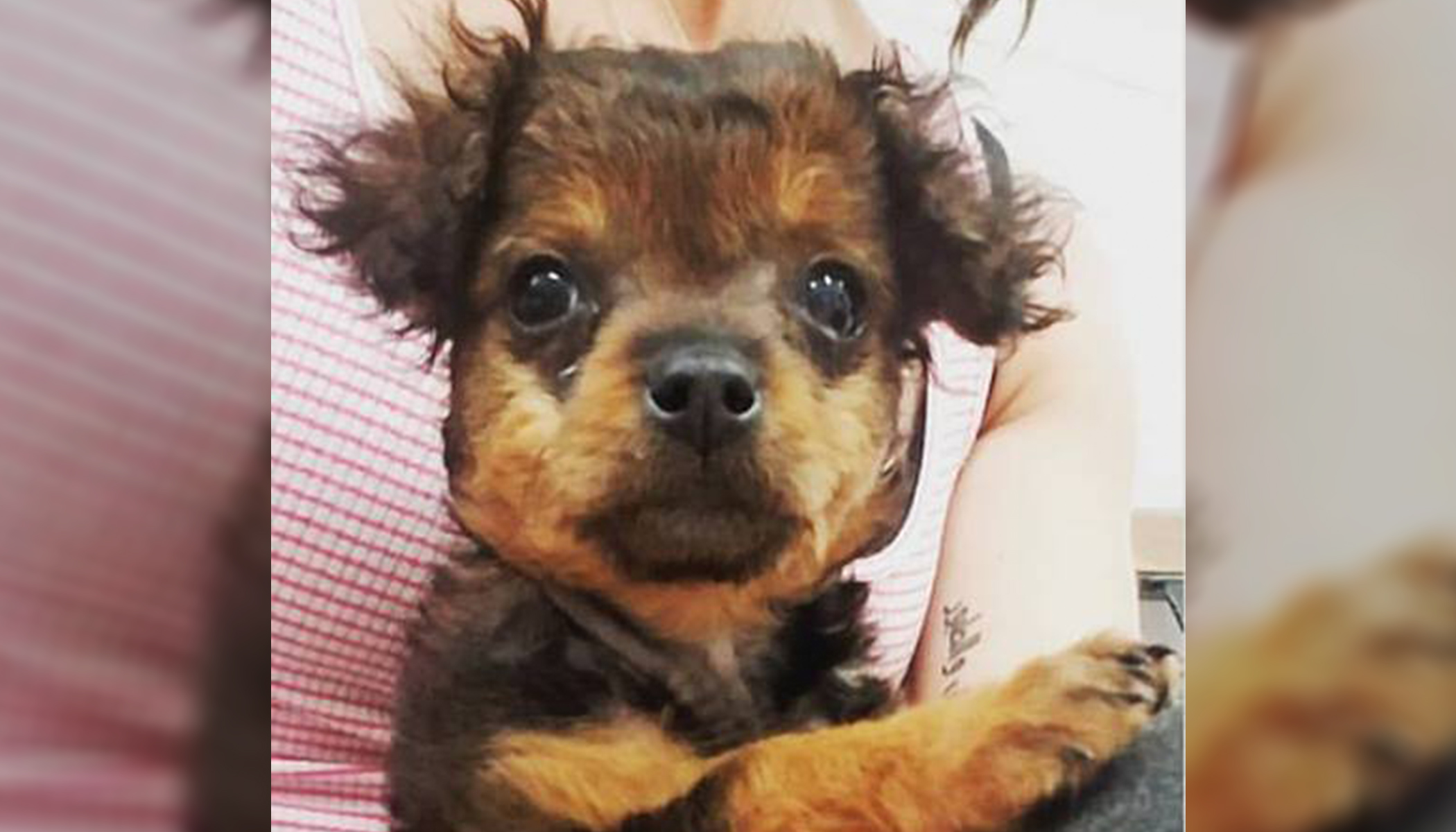 Family Abandons 'Paralyzed' Pup to Be Put Down. But Hours Later, the Vet Sees a Miracle