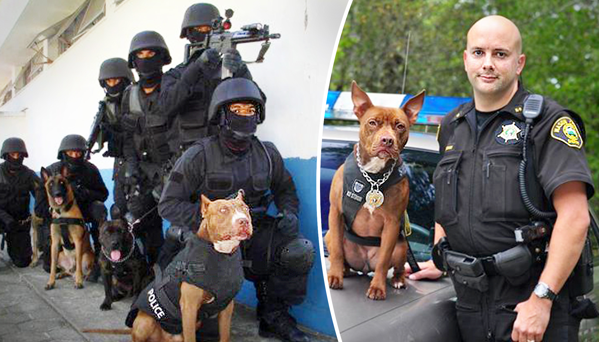 Police Departments Needed Cheaper K9s, so They Adopted Pit Bulls From Dog Shelters