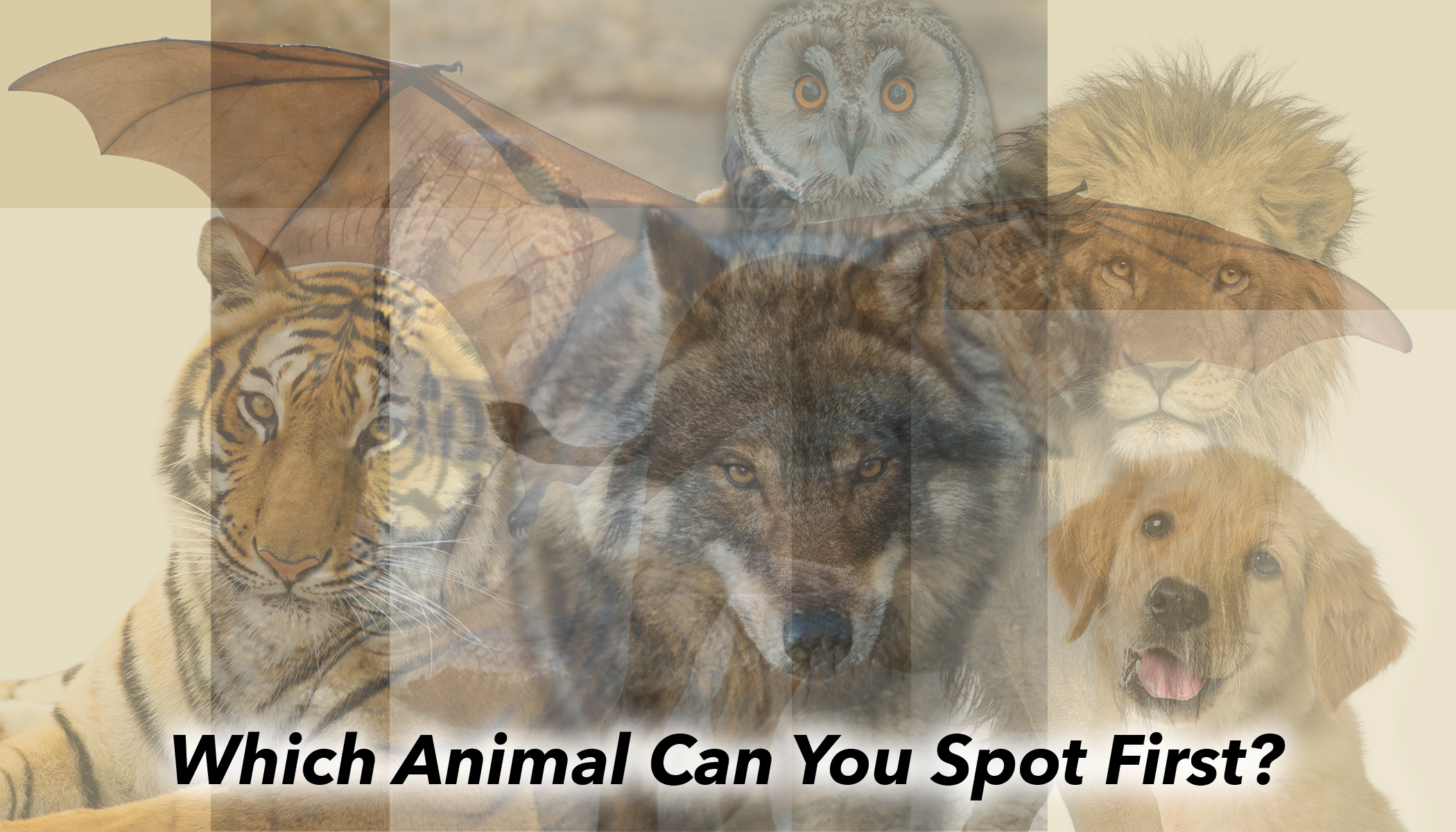 Psychology Test: The First Animal You See Reveals Your Personality