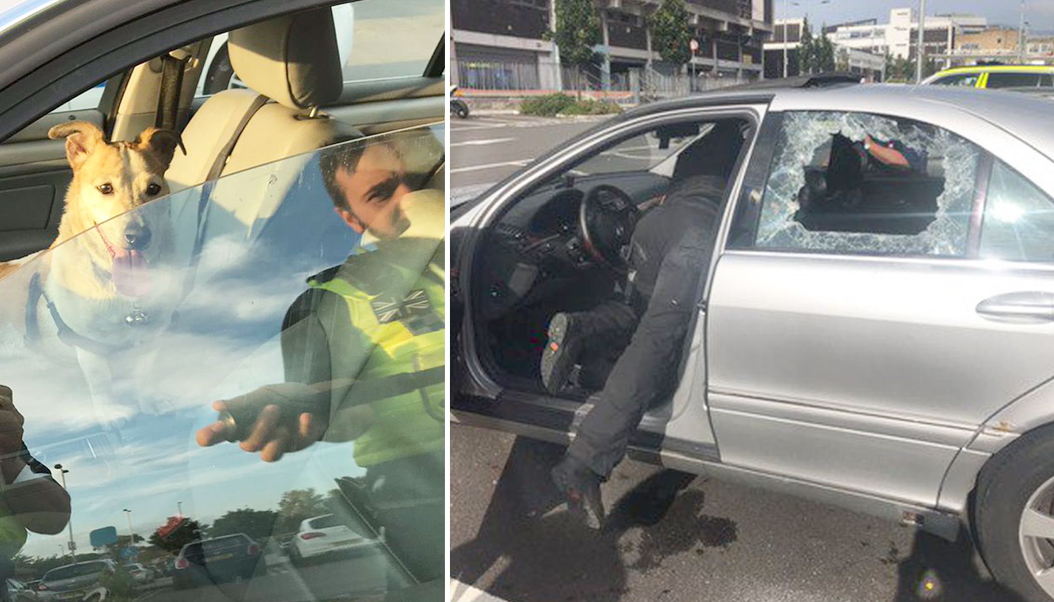 Cops Smash Window to Save Dog Trapped Inside Boiling-Hot Car, but Owners Aren't Happy