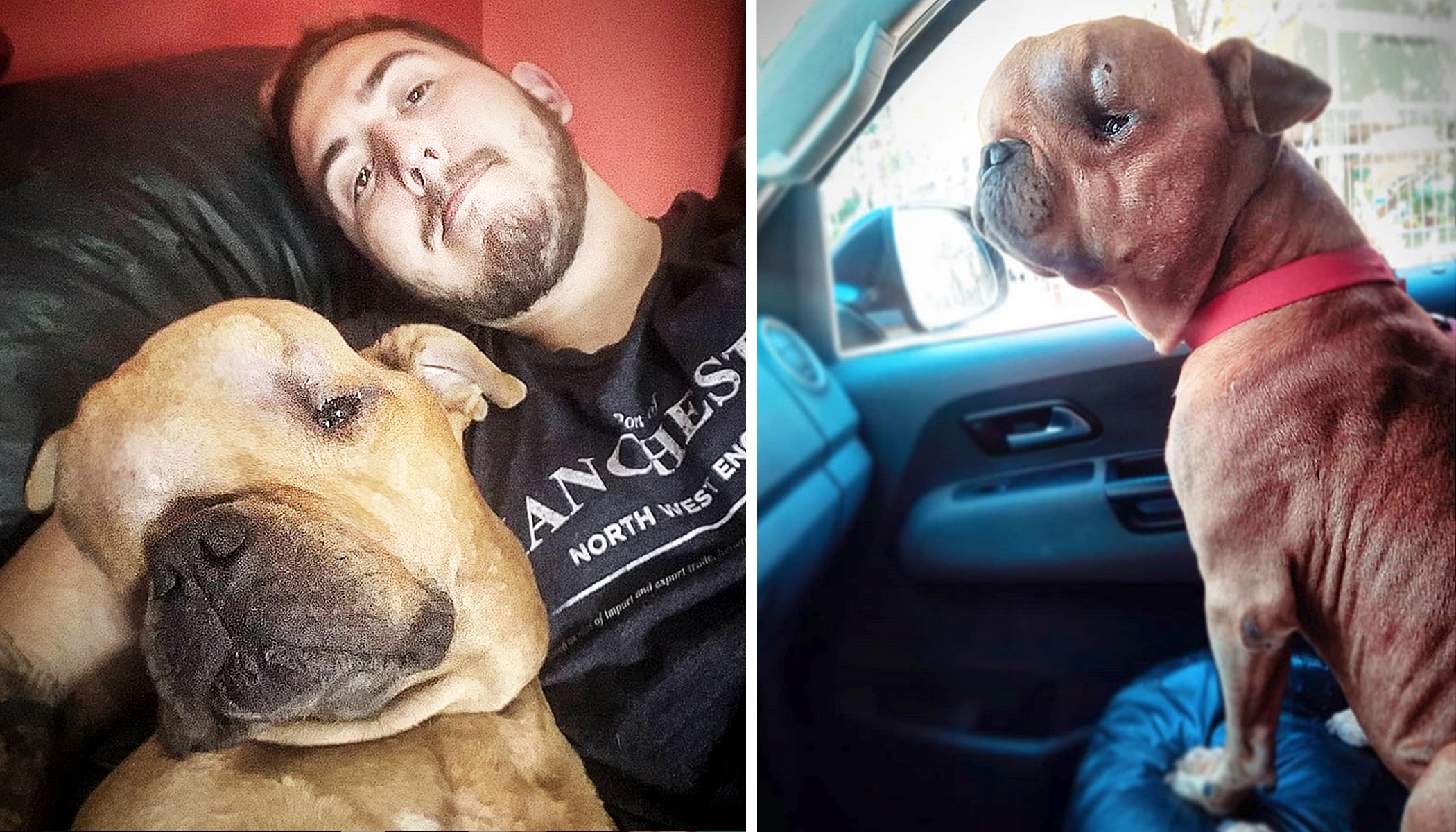 Man Adopts Dog With Massive Tumor on His Head and Offers 'Unconditional Love' in His Last Days
