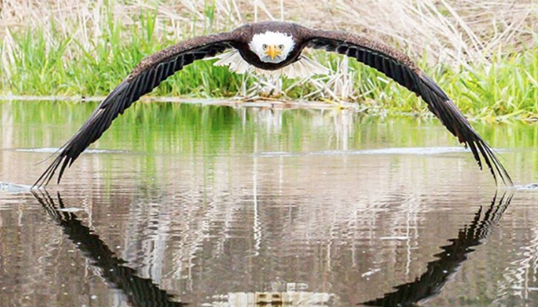 Stunning: Photographer Captures Image of Close Encounter With a Bald Eagle