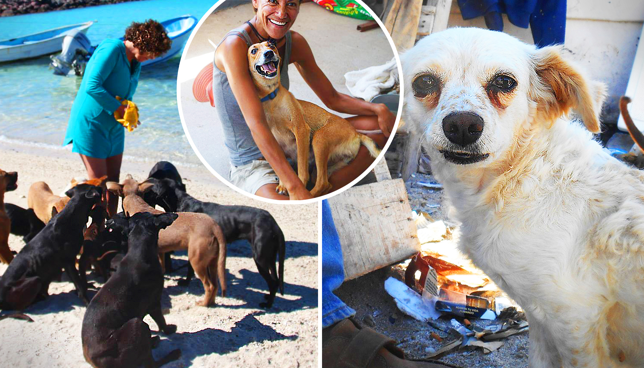 Vacationers Encounter Pack of Stray Dogs in Baja Mexico, and Decide to Give Them All a Home