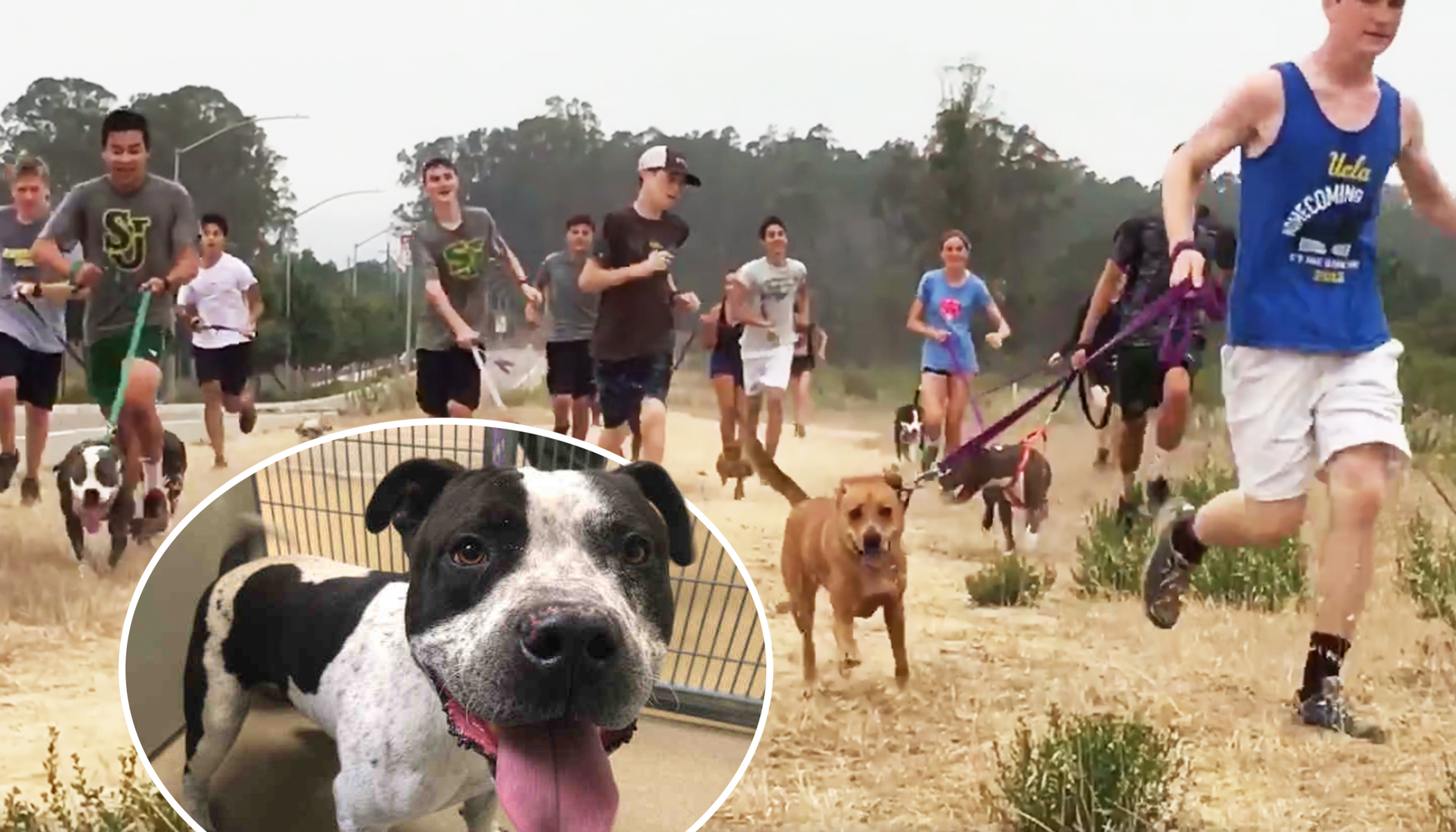 High School Cross-Country Team Takes Shelter Dogs for Runs to Get Exercise During Training